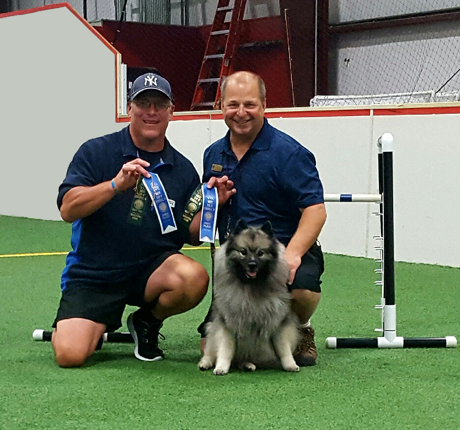 Truffle got her Novice Agility Jumpers title with three perfect 100 scores and the fastest times!